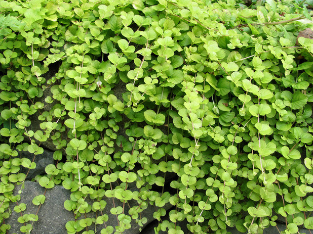 Finding The Best Plants To Grow In The Shade