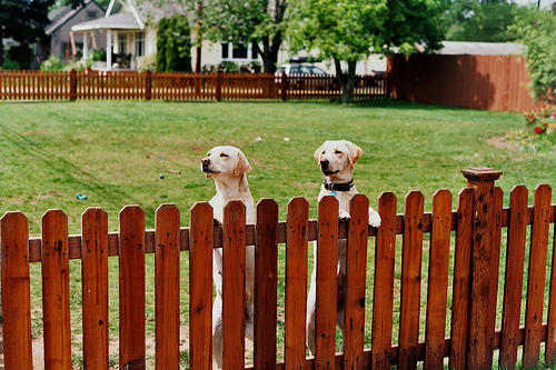 Fenced In Pets