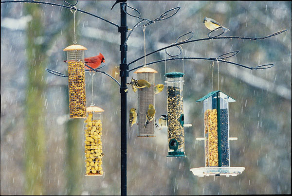 birds-on-feeders