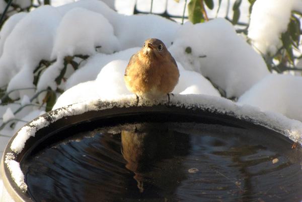 winter-bird-bath