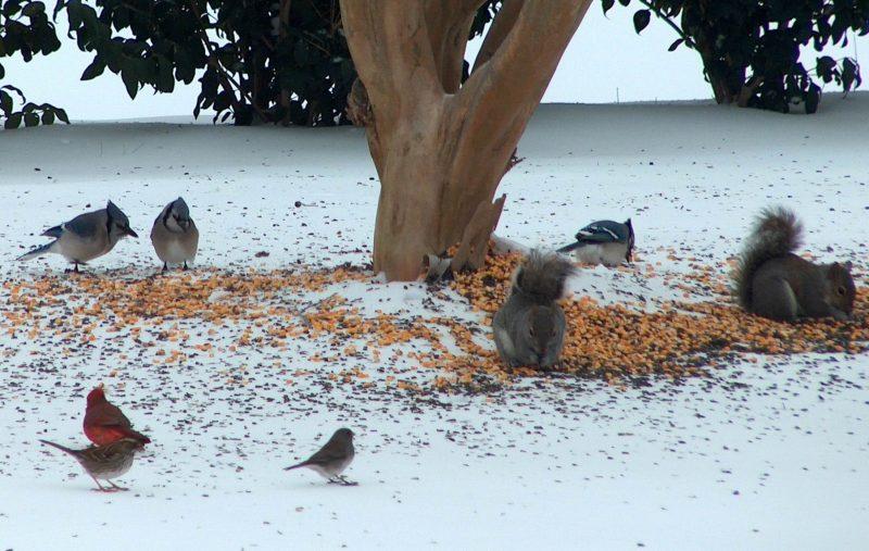 winter-wildlife