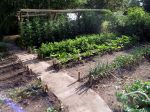 The Mittleider Gardening Method Answers To All Of Your