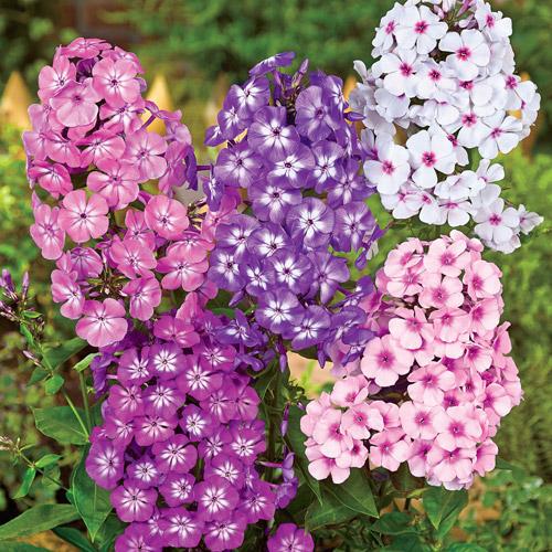 summer perennial flowers, Natural flower