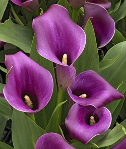 6 plants that make beautiful easter gifts click for details negle Choice Image