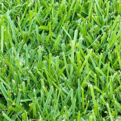 Grass Seed 101 8 Of The Most Popular Types