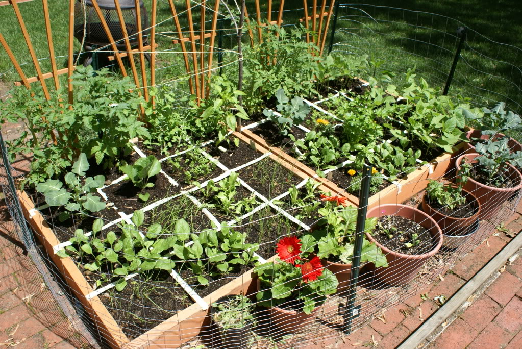 Vegetable Garden Designs: Square Foot Garden Planner