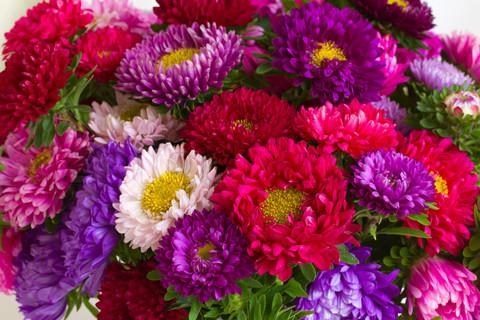 Flower Of The Month Do You Know Your Birth Flower