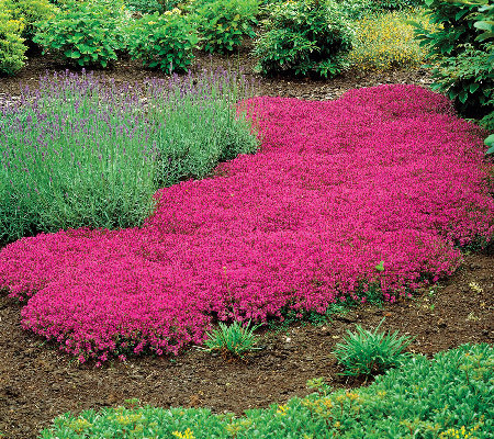 Best Plants For Groundcover