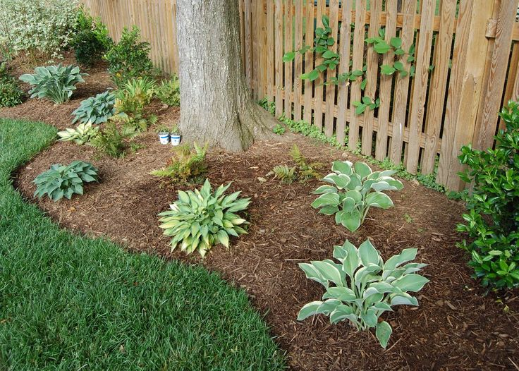Low maintenance landscaping ideas for Landscaping ideas around trees pictures