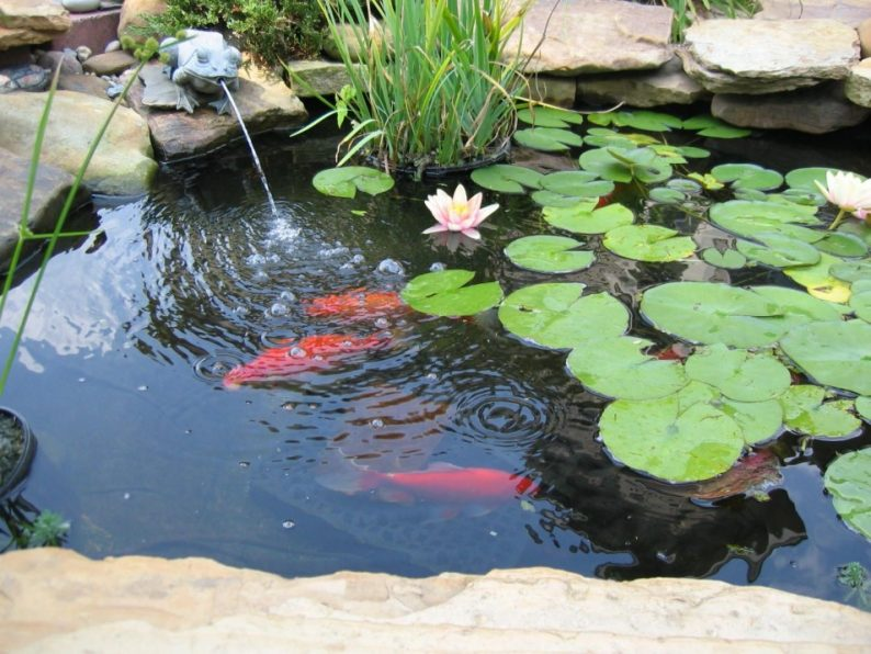Backyard ponds a do it yourself guide for Do it yourself koi pond